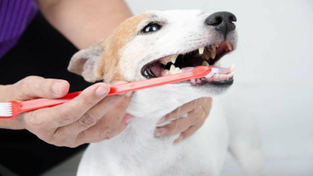 dog dental hygiene tips from daisy mountain veterinary hospital in anthem arizona